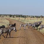 Горящие туры на Занзибар
