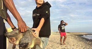 Защита черепах наКабо-Верде