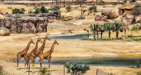 Зоопарк игорячие источники Аль Айна