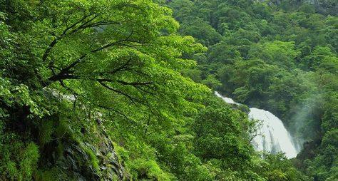 Открыть первозданную природу Индии сопытным проводником поджунглям