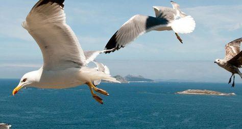 Прогулка под парусом наКаспийском море