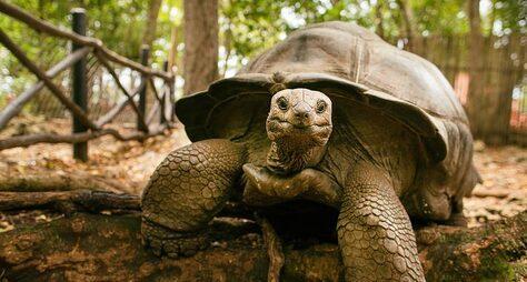 ИзЗанзибара— наостров гигантских черепах