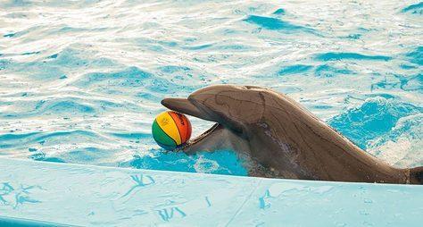 Дельфинарий наПхукете