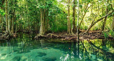 Экспедиция вмангровые джунгли