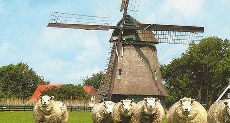 ИзАмстердама пофермам ирыбацким деревням