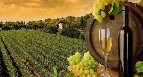 Колыбель вина— Кахетия!