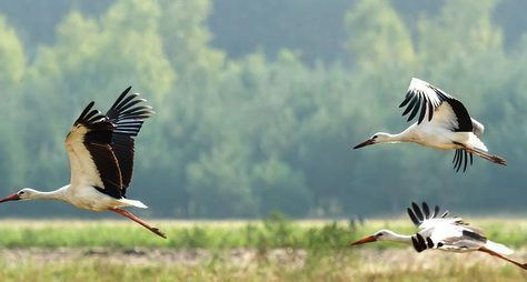 Красота Брестской земли: Беловежская пуща инетолько за2 дня